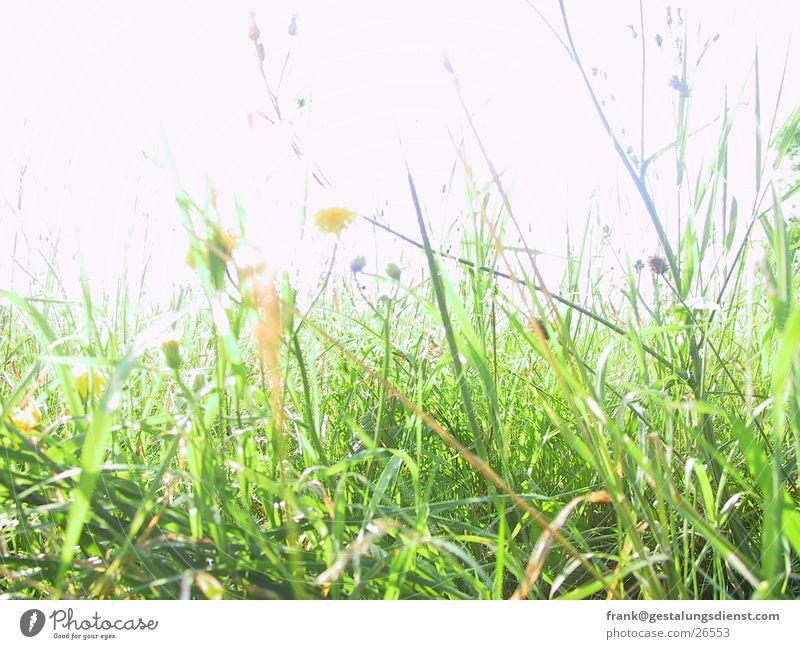 flower meadow Meadow Grass Flower Summer Bee Green Detail