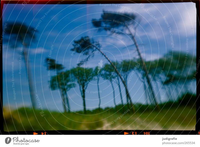 Nature Tree Plant Environment Landscape Coast Dream Moody Wind Wild Natural Exceptional Baltic Sea Tilt Darss Western Beach