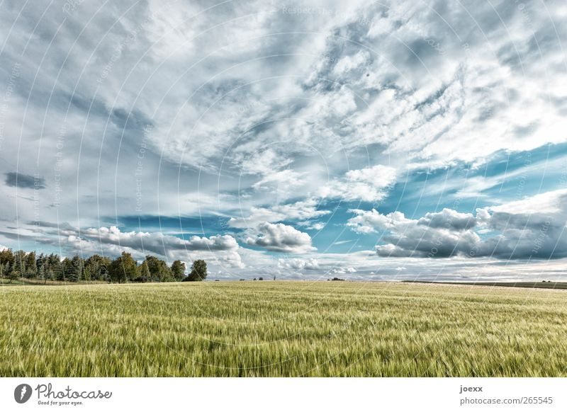 Sky Nature Summer Clouds Bright Horizon Field Idyll Beautiful weather Land Feature Agricultural crop