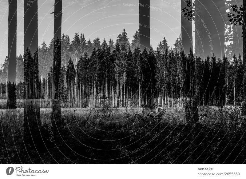 Nature Landscape Forest Dark Double exposure Parallel Complex