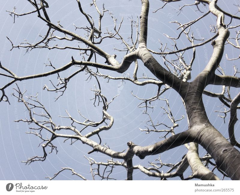 Sky Nature Blue Old Tree Plant Environment Spring Wood Freedom Gray Earth Time Power Natural Growth
