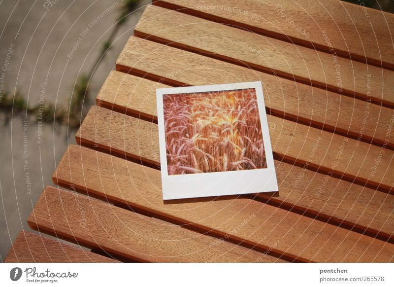 Polaroid is on the garden table. Agriculture. Ears of corn, wheat Table Field Concrete wood Brown Colour photo Exterior shot Cornfield Ear of corn Wheat