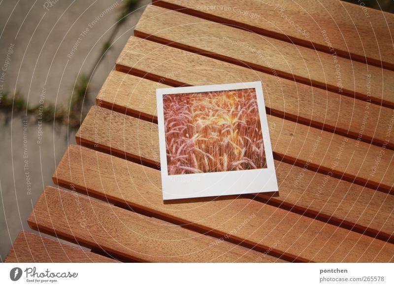 Wood Brown Field Lie Concrete Table