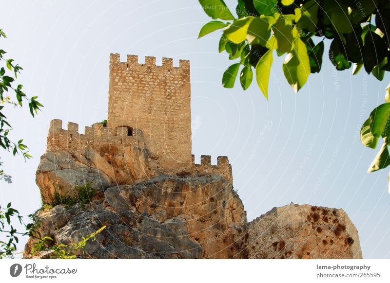 Castillo [XXXIII] Leaf Foliage plant Rock Zuheros Andalucia Spain Castle Ruin Tower Wall (barrier) Wall (building) Landmark Old Past Medieval times Defensive