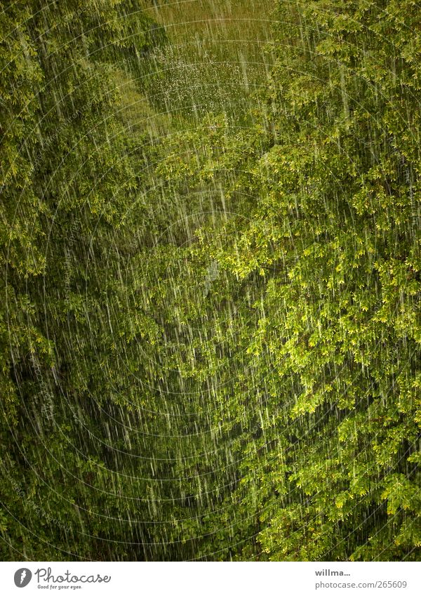 Rain brings blessing Tree Environment Nature Climate Weather Bad weather Storm Forest Wet Green Rainy weather