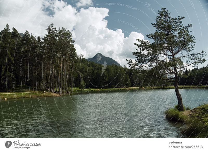 forest lake Healthy Harmonious Relaxation Calm Vacation & Travel Tourism Trip Adventure Far-off places Freedom Summer vacation Hiking Environment Nature