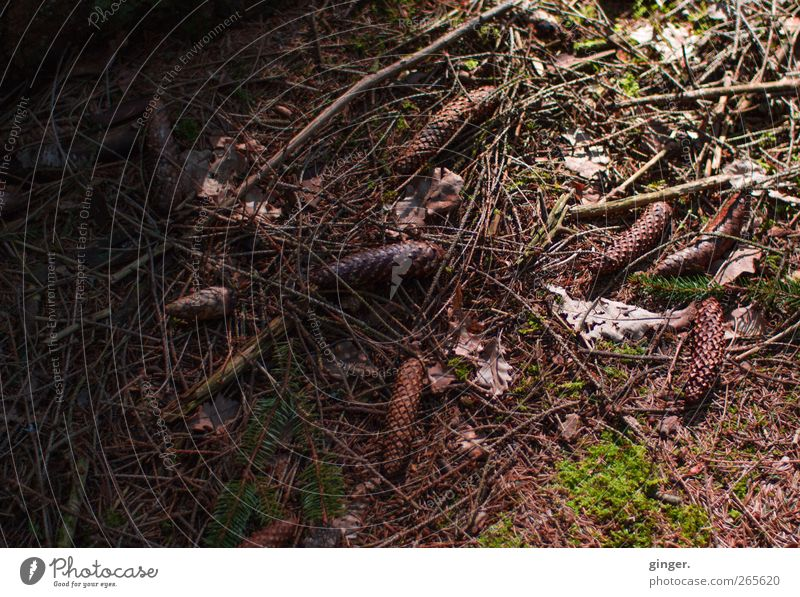 take my darkness into light. Environment Nature Plant Spring Autumn Moss Forest Brown Cone Fir needle Fallen Lie Ground Undergrowth Twigs and branches Remainder