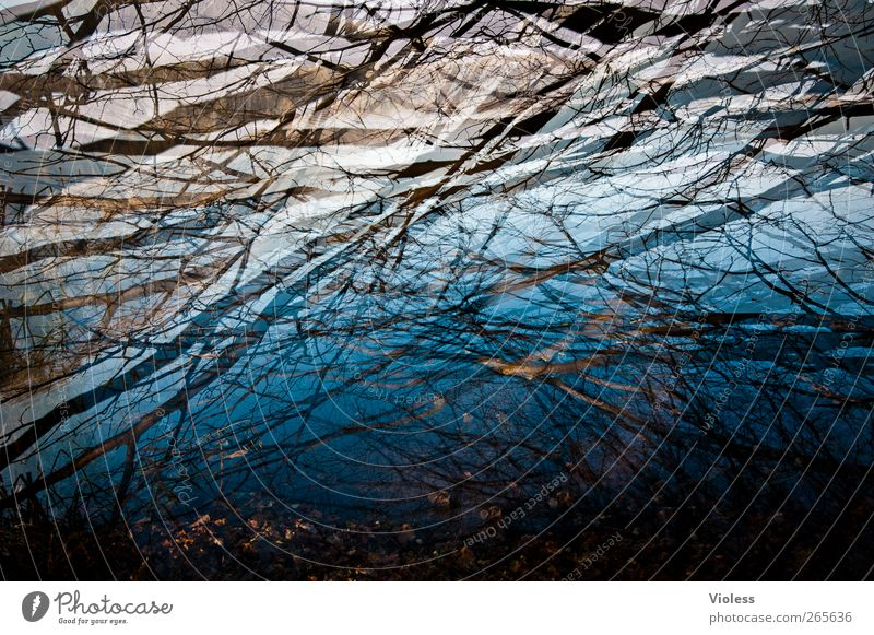 In the depth Water Lakeside Dark Wet Blue Branch Twigs and branches Reflection Double exposure Colour photo Exterior shot Experimental Deserted Day