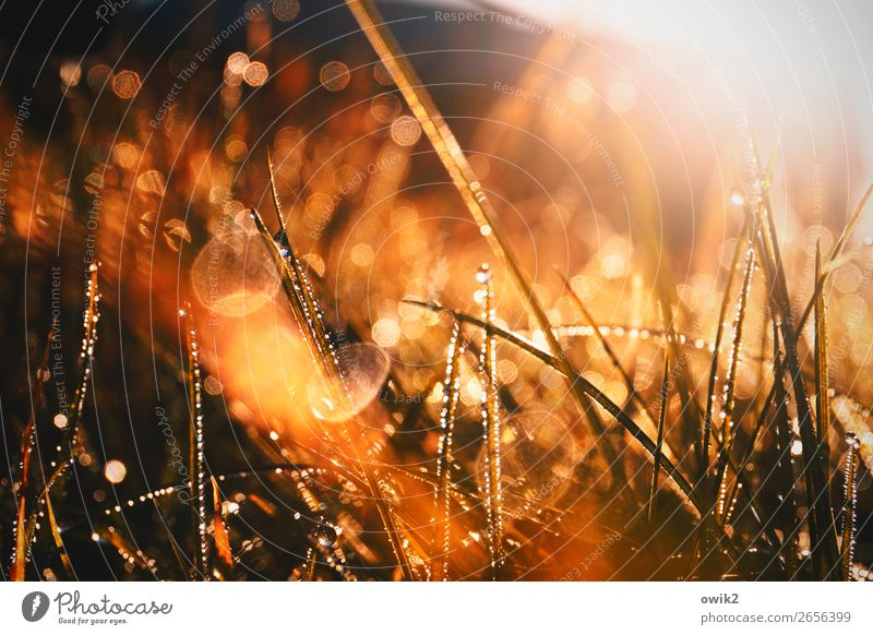 Grass, light and water Environment Nature Plant Drops of water Beautiful weather Bushes Blade of grass Meadow Glittering Illuminate Near Wet Idyll