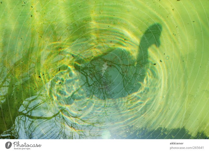 88 | Shady sides Environment Nature Elements Water Animal Bird Swan Wet Natural Colour photo Multicoloured Exterior shot Day Light Shadow