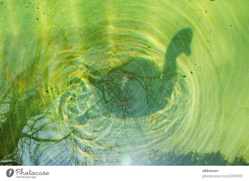Nature Water Animal Environment Bird Natural Wet Elements Swan