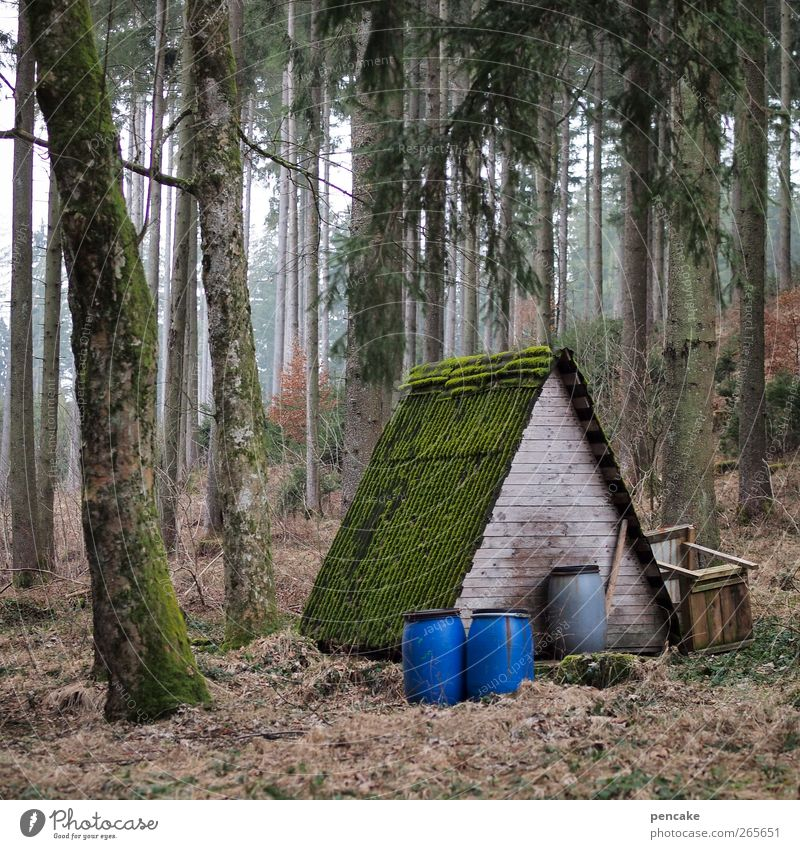 base camp A Nature Landscape Tree Forest Hut Feeding Living or residing Winter activities Keg Wooden hut Colour photo Subdued colour Exterior shot Deserted