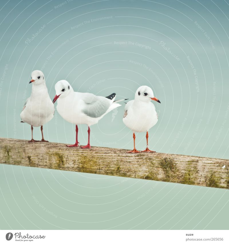 Sky Nature White Animal Calm Environment Cold Wood Small Air Bird Wild animal Wait 3 Stand Elements