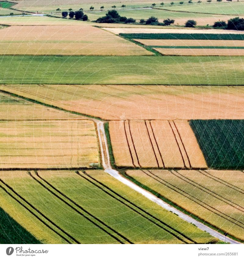 agriculture Workplace Agriculture Forestry Environment Nature Landscape Beautiful weather Plant Agricultural crop Meadow Field Line Stripe Utilize Observe