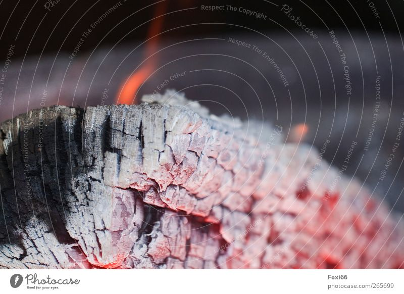 """Easter fire Feasts & Celebrations Fire Wood Embers ash Hot Warmth Gold Gray Red Black Romance Calm Flame """"Decay,"""" Close-up Macro (Extreme close-up)"""