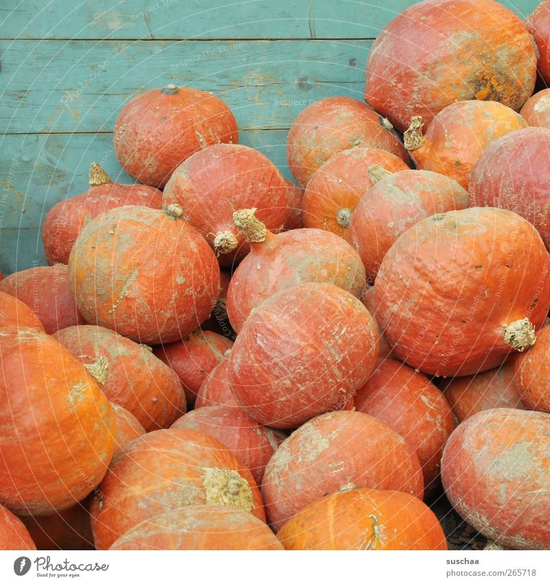 many pumpkins in one heap Autumn Round Juicy Nutrition food products Fruit Vegetable Pumpkin Agriculture Harvest Orange store Colour photo Exterior shot