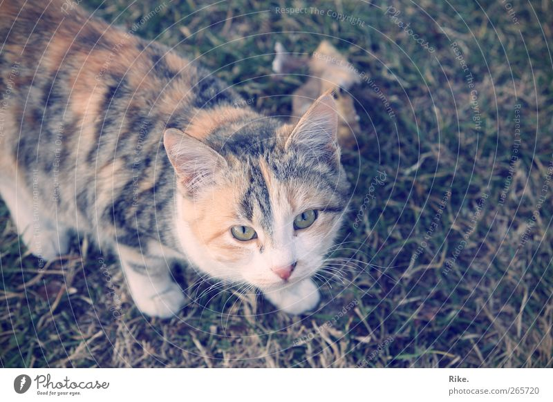 Mice hunter. Environment Nature Animal Leaf Grass Meadow Pet Cat 1 Observe Hunting Beautiful Natural Warm-heartedness Discover Threat Pelt Colour photo