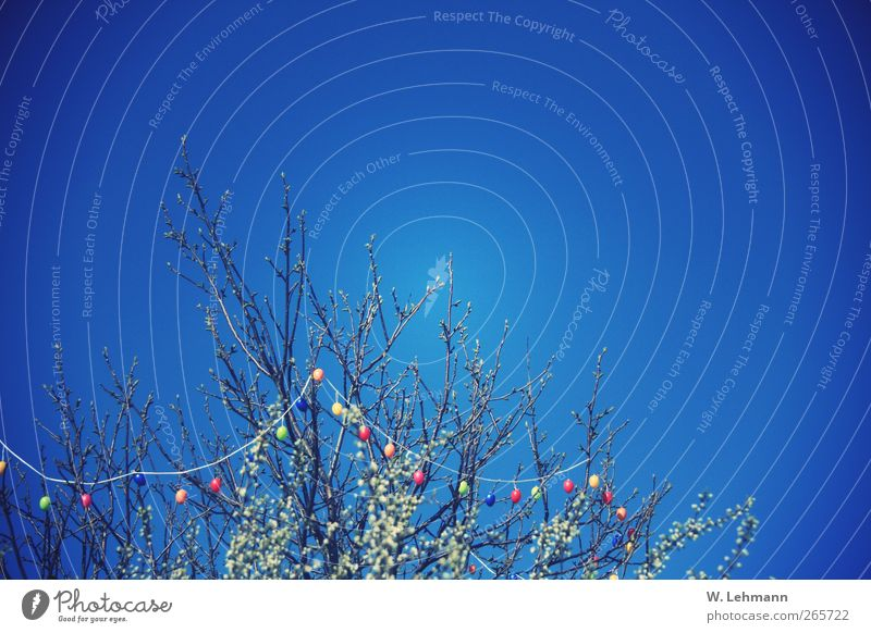 Sky Nature Tree Plant Calm Environment Landscape Spring Air Easter Beautiful weather