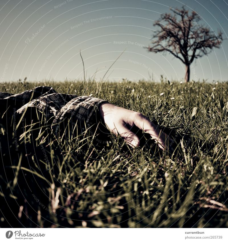 Human being Sky Nature Hand Tree Plant Loneliness Meadow Grass Moody Treetop Grassland Stagnating