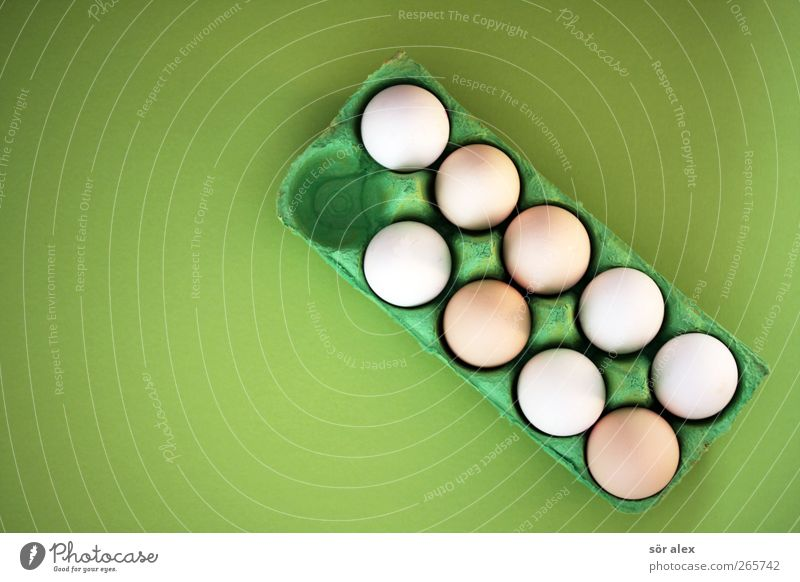Green White Food photograph Healthy Fresh Round Easter Organic produce Breakfast Row Egg Still Life Packaging Lacking Sequence