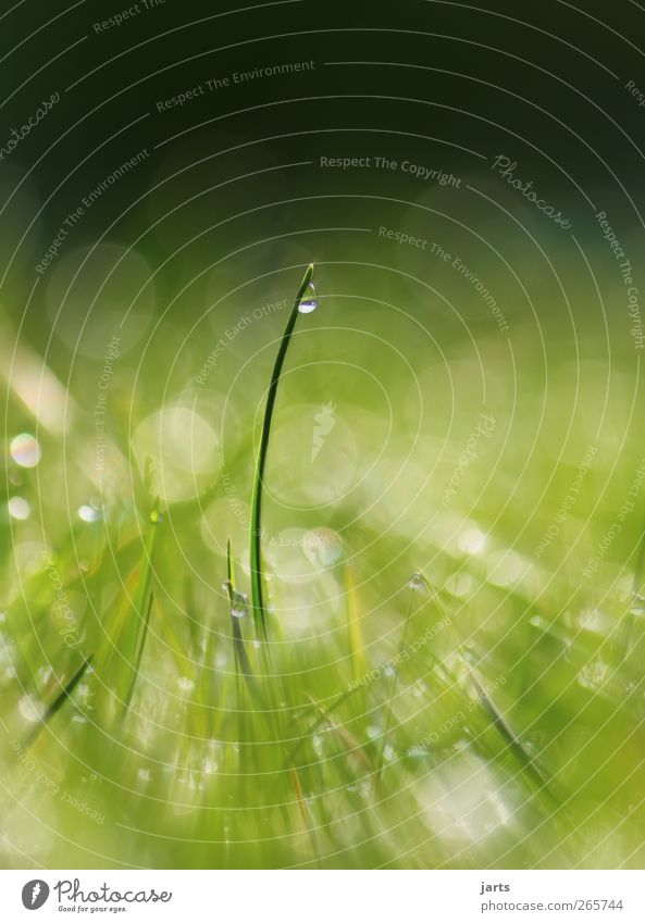 Nature Green Plant Meadow Grass Healthy Glittering Natural Fresh Drops of water Beautiful weather