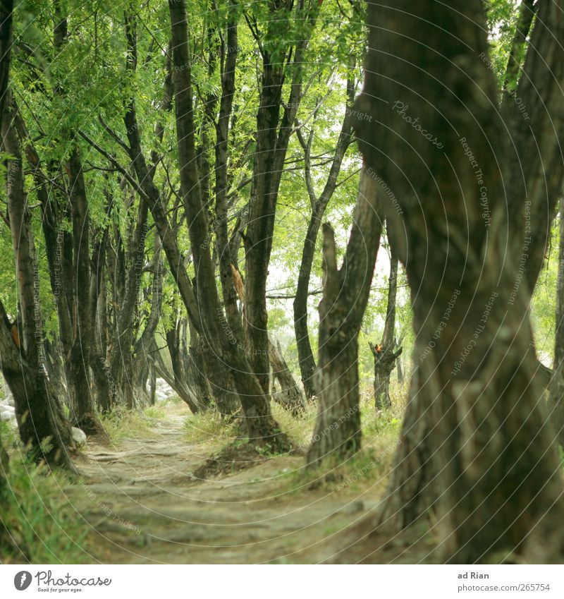 thickets Tree Park Forest Relaxation Undergrowth Lanes & trails Passage Colour photo Worm's-eye view