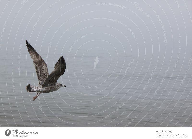 Nature Water Ocean Loneliness Calm Animal Environment Sadness Death Gray Freedom Bird Dream Fog Air