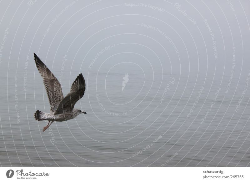 Nature Water Ocean Loneliness Calm Animal Environment Sadness Death Gray Freedom Bird Dream Fog Air Free