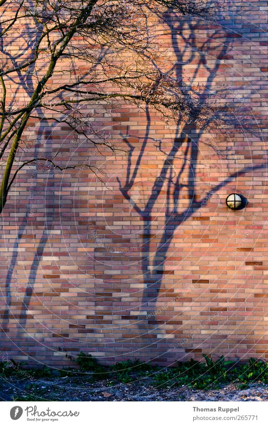 shadows on the wall Plant Beautiful weather Tree Deserted Industrial plant Factory Wall (barrier) Wall (building) Facade Stone Concrete Authentic Power Trust