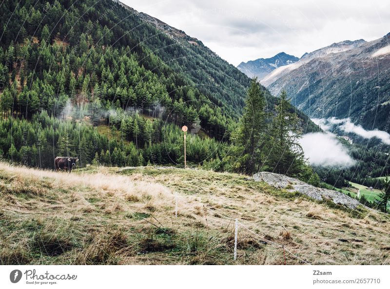 Zwieselstein | E5 Adventure Hiking Nature Landscape Clouds Autumn Forest Alps Mountain Cow Sustainability Natural Green Loneliness Idyll Environment