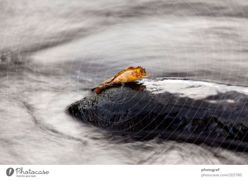 Water Life Autumn Grass River Stone Day Flow Motion blur