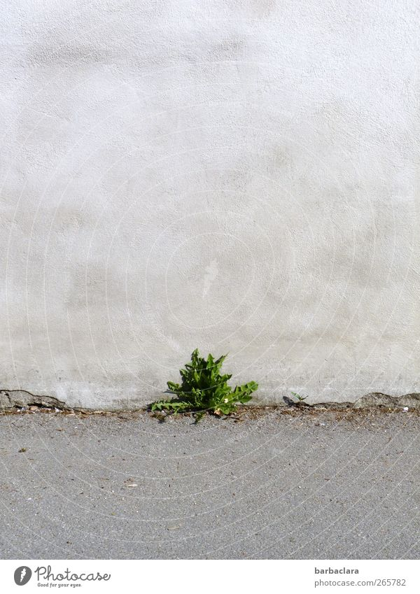 Green Plant Leaf Street Wall (building) Lanes & trails Gray Small Stone Wall (barrier) Power Natural Concrete Beginning Fresh Growth