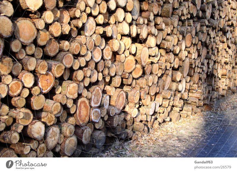 Tree Wood Tree trunk Stack of wood