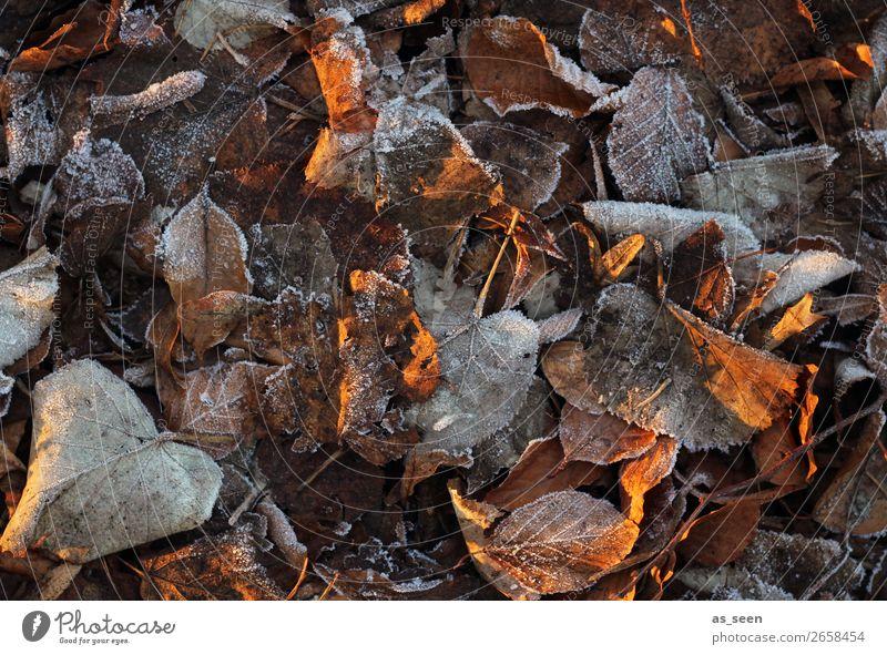 Nature Old Plant Colour Leaf Calm Winter Autumn Environment Cold Natural Garden Orange Brown Gray Park