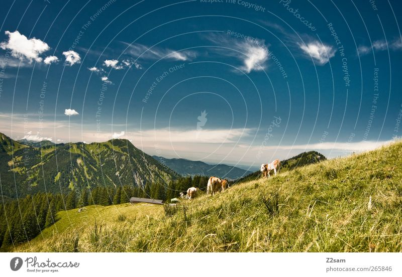 Nature Vacation & Travel Summer Calm Relaxation Environment Landscape Meadow Mountain Above Horizon Leisure and hobbies Natural Hiking Trip Idyll