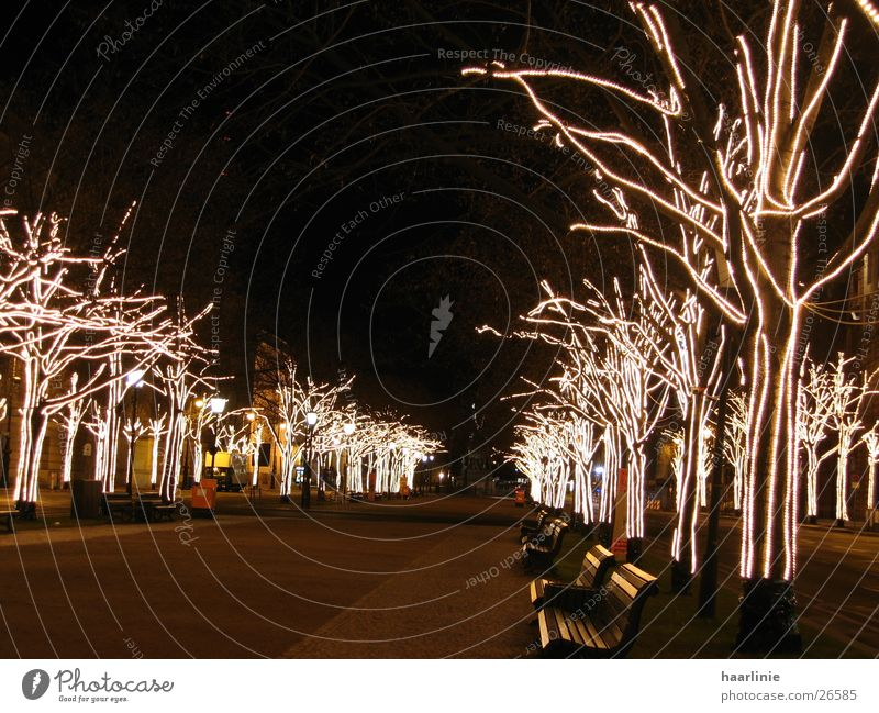 christmas among the lime trees Unter den Linden Tree Avenue Town Art Europe Berlin Christmas mood At night in Berlin Lime tree Urban life urban architecture