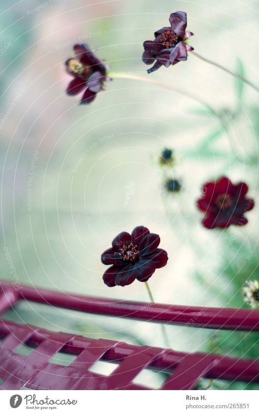 Nature Beautiful Red Plant Flower Calm Natural Simple Blossoming Joie de vivre (Vitality) Still Life Positive Brash Garden chair