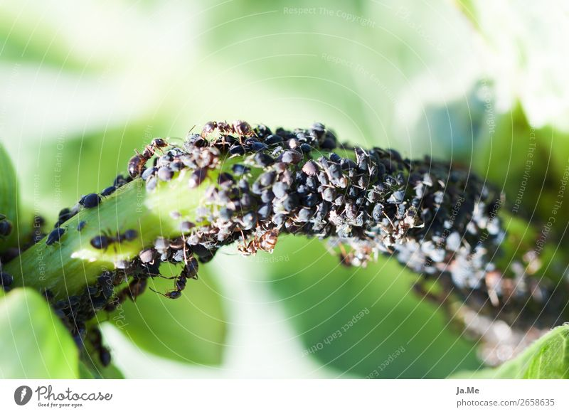 Ditte round at the buffet Animal Plant Grass Leaf Foliage plant Agricultural crop Wild plant Garden Park Meadow Wild animal Insect Ant Column of ants Pests