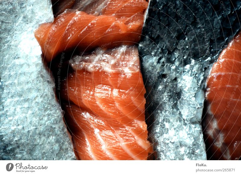 fish factory Food Fish Nutrition Dead animal Blue Red Salmon Scales Damp Remainder Trash Part Colour photo Interior shot Close-up Deserted Artificial light