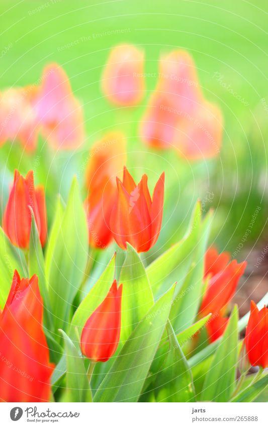 Nature Green Beautiful Red Plant Flower Colour Calm Spring Garden Blossom Glittering Natural Fresh Serene Joie de vivre (Vitality)