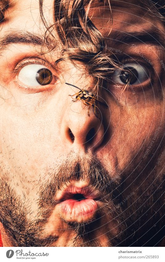 instant Human being Masculine Face Eyes Facial hair 18 - 30 years Youth (Young adults) Adults wasp Curiosity Colour photo Interior shot Close-up Detail