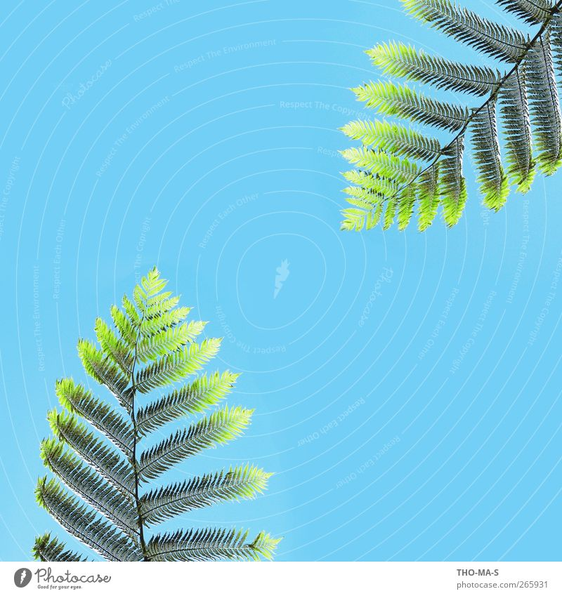 Sky Nature Vacation & Travel Plant Blue Green Beautiful Colour Calm Natural Wild Air Growth Uniqueness Beautiful weather Attachment
