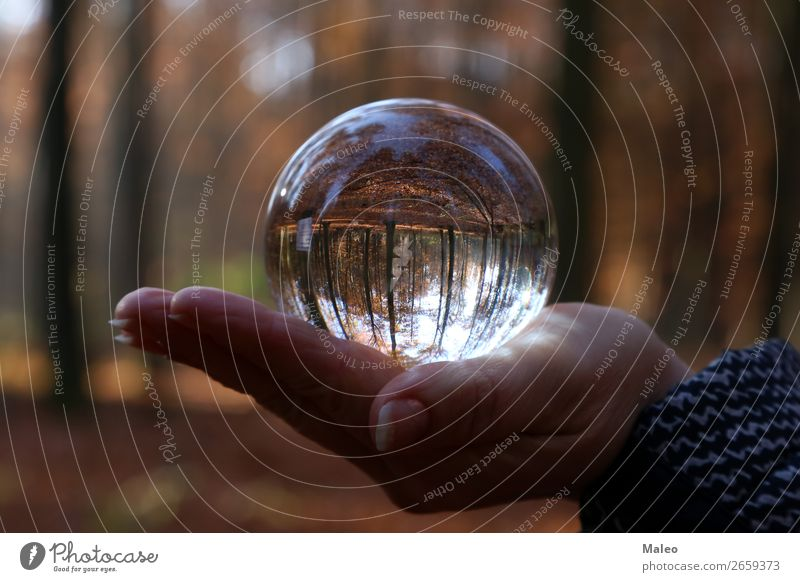 Autumn through a glass ball Ball Illumination Fingers Autumn leaves Background picture Sphere Beautiful Brown Circle Landscape Crystal Day Vicinity Tree Fantasy