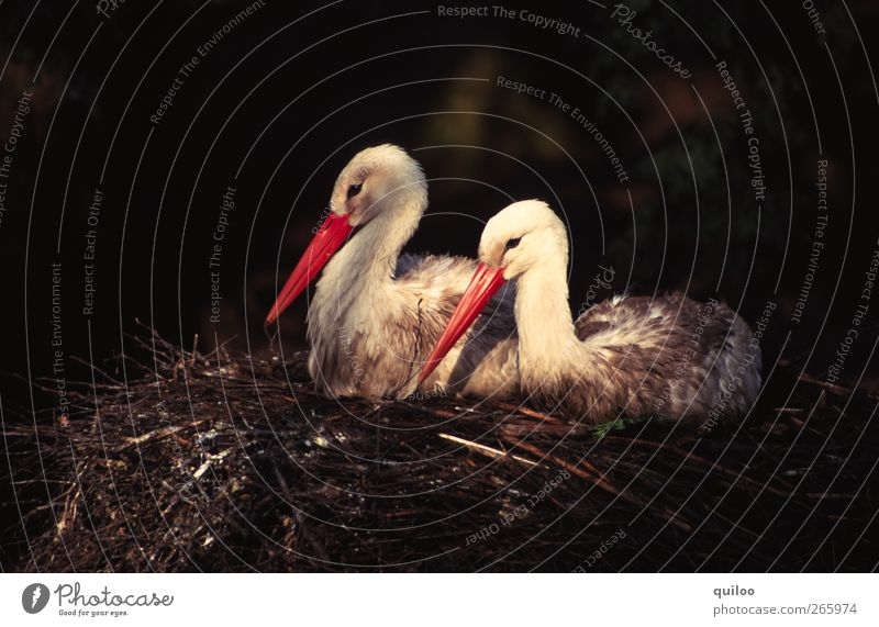 Child Nature White Red Animal Black Love Happy Bird Together Friendship Contentment Pair of animals Sit Future Safety
