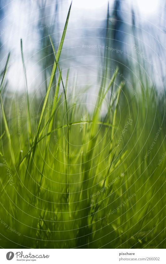 beetle perspective Nature Grass Meadow Blue Green Colour photo Exterior shot Day Shallow depth of field