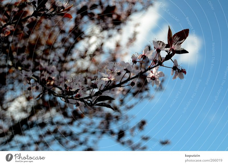 April Nature Plant Air Sky Clouds Sunlight Spring Climate Weather Beautiful weather Tree Flower Bushes Leaf Blossom Agricultural crop Garden Park Blue