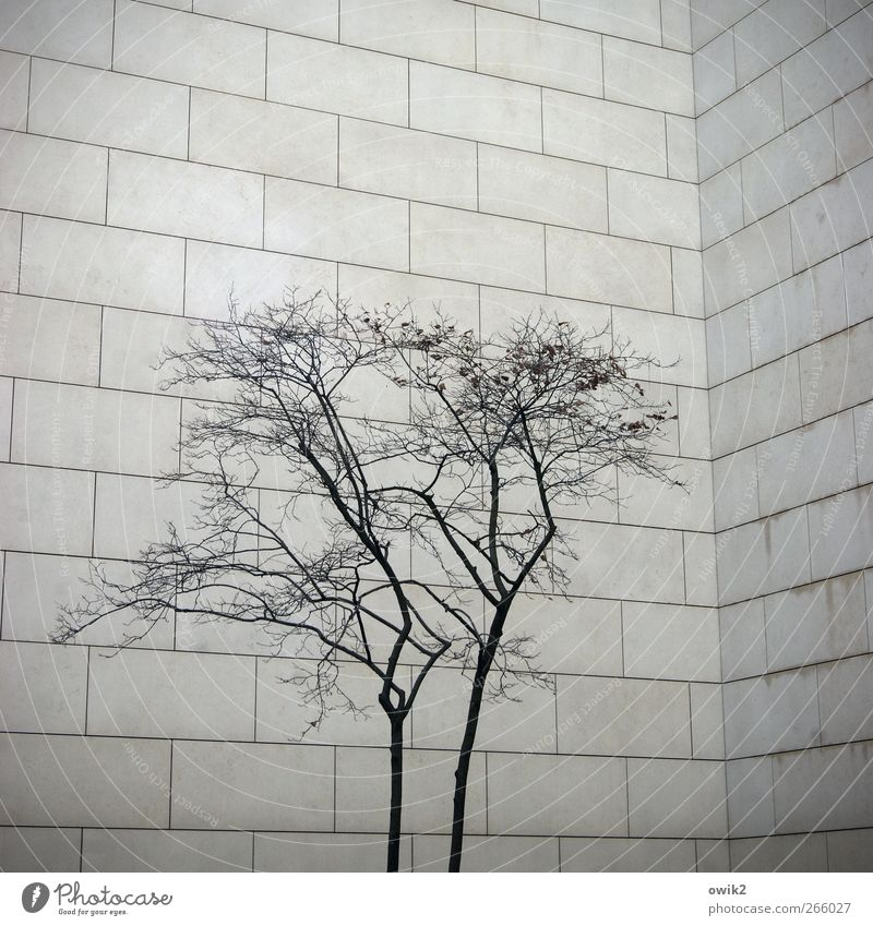 claustrophobia Plant Tree Branch Twigs and branches Manmade structures Building Architecture Wall (barrier) Wall (building) Facade Sandstone Simple Stand Growth