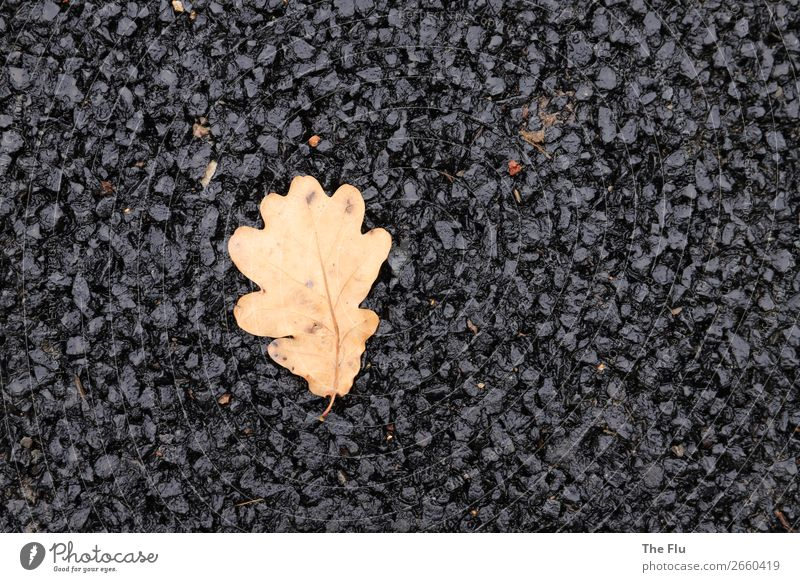 Lost in the asphalt desert Plant Autumn Leaf Street Old Wait Dry Brown Black Loneliness Elegant Apocalyptic sentiment Environmental pollution