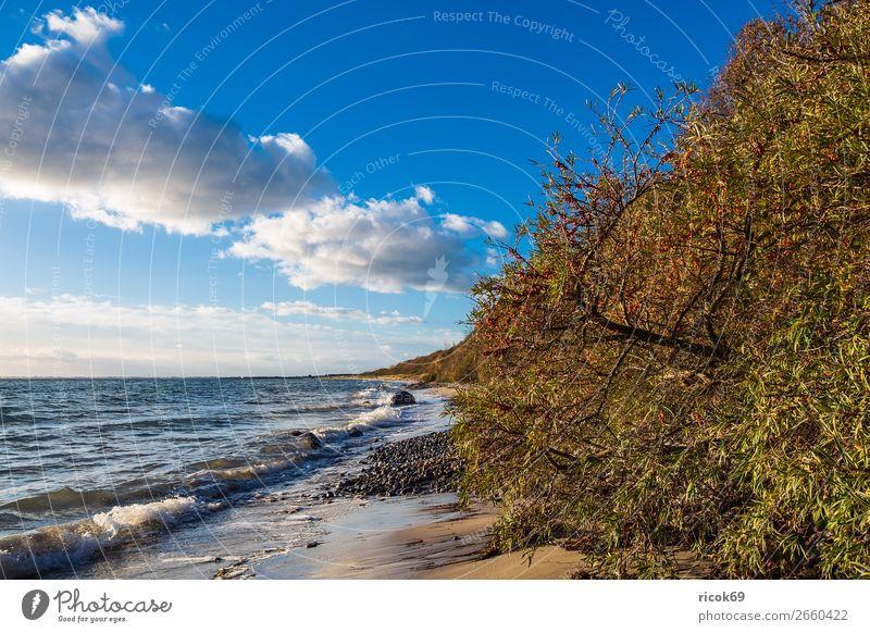Baltic Sea coast near Klintholm Havn in Denmark Vacation & Travel Tourism Beach Ocean Waves Nature Landscape Water Clouds Autumn Tree Coast Stone Blue Green
