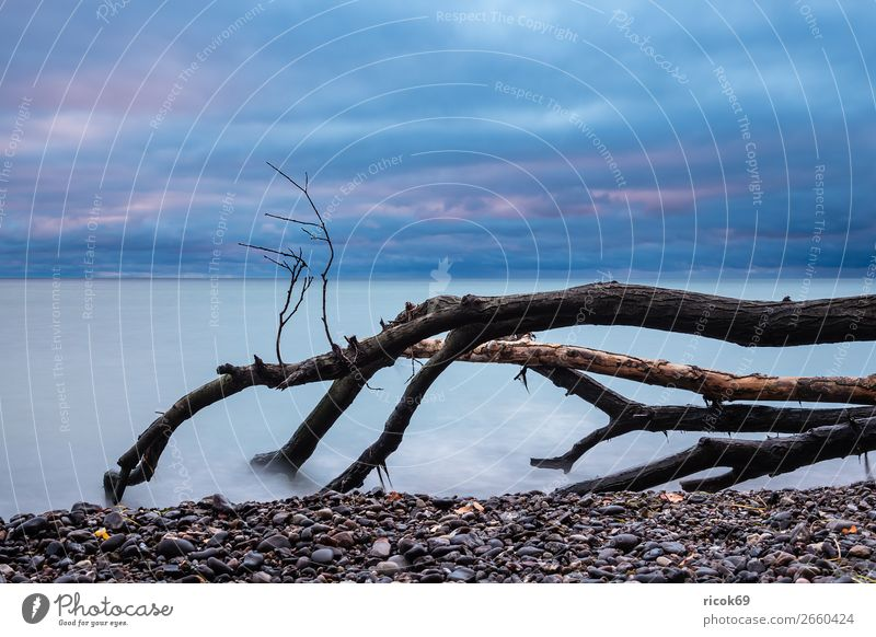 Baltic Sea coast on the island of Moen in Denmark Vacation & Travel Tourism Beach Ocean Nature Landscape Water Clouds Autumn Tree Coast Stone Blue Idyll moen